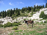 Kamoua National Park, The Biggest Forest In The Middle East - Cute Donkey