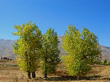 Automn Scenic View , Al Arz , Becharri , North Lebanon