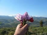 From Me To U , Gebrayel Pin Forests Wild Flowers