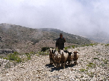 Kamoua National Park, The Biggest Forest In The Middle East - Sheperd & Sheeps