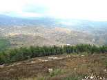 The Pin Forest Of Gebrayel In Face Of The Akkarian Hills