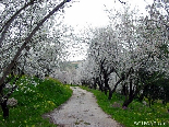 The Road To Spring , Bayno , Akkar