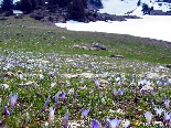 The Snow Going Back & The Flowers Rising , Kobayat National Reserve